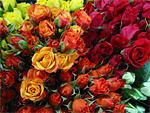 Spray Roses from Flowers for Florists